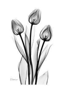 Tall Early Tulips N Black and White by Albert Koetsier