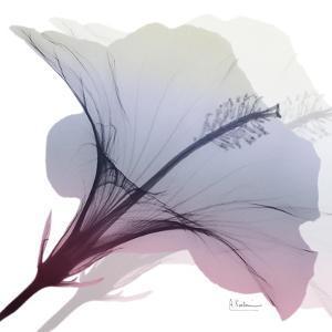 Tasty Grape Hibiscus 2 by Albert Koetsier