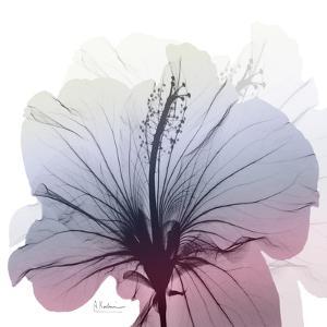 Tasty Grape Hibiscus by Albert Koetsier