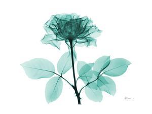 Tea Rose 1 by Albert Koetsier