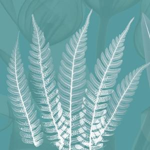 Teal Fern Xray by Albert Koetsier
