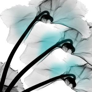 Teal Luster Cyclamen by Albert Koetsier