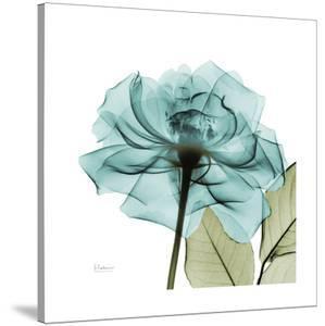 Teal Rose Green by Albert Koetsier