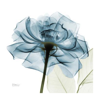Teal Rose by Albert Koetsier