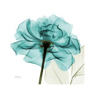 Teal Rose by Albert Koetsier