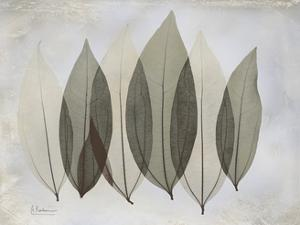 The Grays 5 by Albert Koetsier
