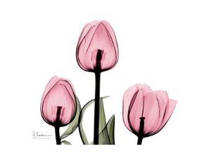 The Tallest Tulip by Albert Koetsier