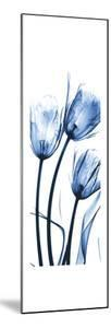 Three Blue Tulips by Albert Koetsier