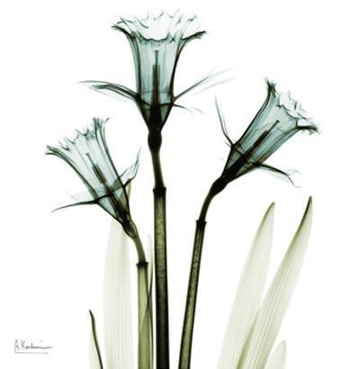 Three Daffodils in Green