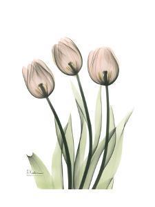 Three Pale Pink Tulips by Albert Koetsier