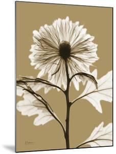 Tonal Chrysanthemum by Albert Koetsier