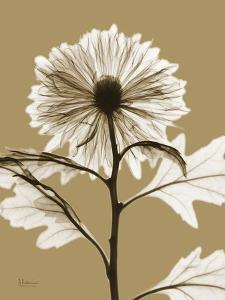 Tonal Chrysanthemum by Albert Koetsier