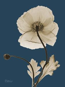 Tonal Poppy on Navy by Albert Koetsier