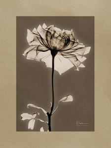 Tonal Rose Mat 2 by Albert Koetsier