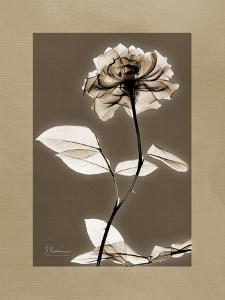 Tonal Rose Mat by Albert Koetsier