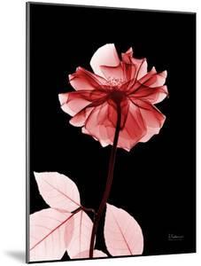 Tonal Rose on Black 2 by Albert Koetsier