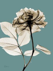 Tonal Rose on Blue by Albert Koetsier