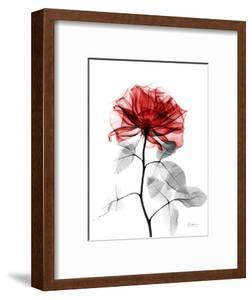 Tonal Rose on White 2 by Albert Koetsier