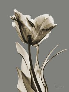 Tonal Tulip on Gray by Albert Koetsier