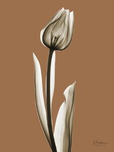 Tonal Tulip on Mocha by Albert Koetsier