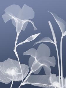 Transparent Flora 4 by Albert Koetsier
