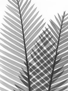 Tropical Fern 1 by Albert Koetsier