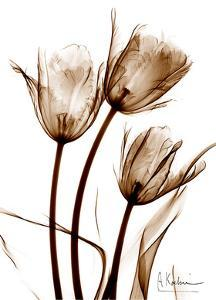 Tulip Arrangement in Brown by Albert Koetsier