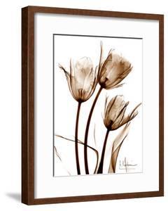 Tulip Arrangement in Brown by Albert Koetsier