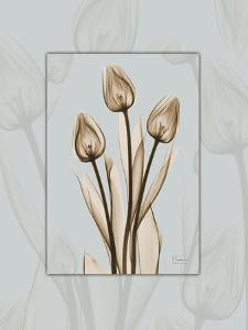 Tulip Blu Brown 2 by Albert Koetsier
