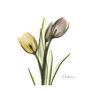Tulip Duo by Albert Koetsier