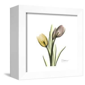 Tulip Duo by Albert Koetsier