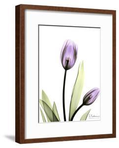 Tulip in Full Bloom by Albert Koetsier