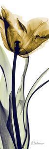 Tulip in Gold by Albert Koetsier