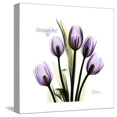 Tulip in Purple, Imagine