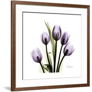 Tulip in Purple by Albert Koetsier