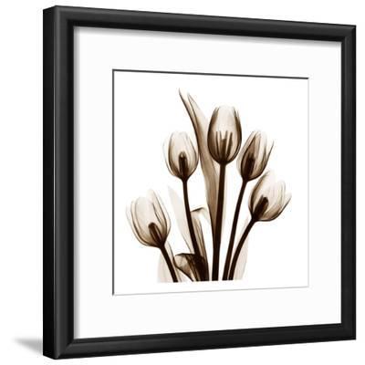 Tulip in Sienna