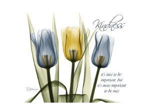 Tulip Kindness by Albert Koetsier