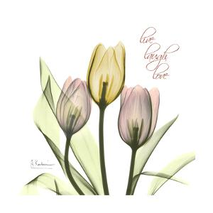 Tulip Love by Albert Koetsier