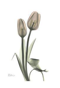 Tulip, Marjorie by Albert Koetsier