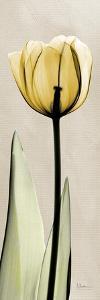 Tulip Moment by Albert Koetsier