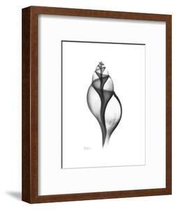 Tulip Shell Gray by Albert Koetsier