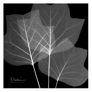 Tulip Tree Close Up Black and White by Albert Koetsier