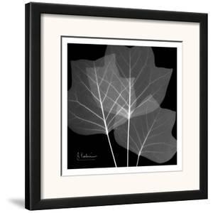Tulip Tree Close Up Black and White by Albert Koetsier