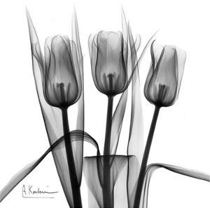 Tulip Trio in Black and White by Albert Koetsier