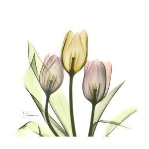 Tulip Trio by Albert Koetsier