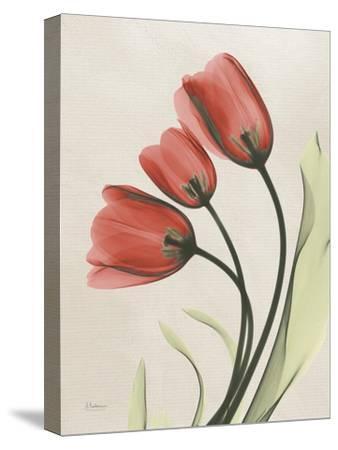 Tulip Whisper