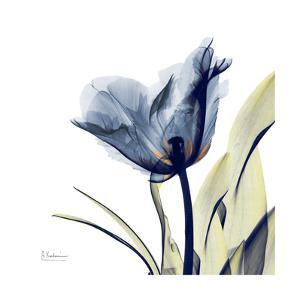 Tulip Whisper by Albert Koetsier