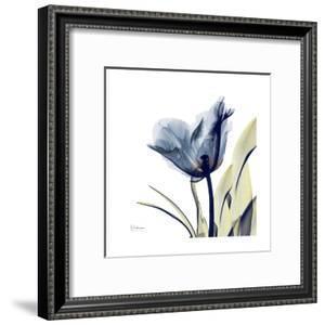 Tulip Whisper by Albert Koetsier