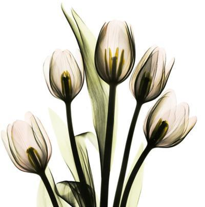 Tulip With Green