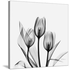 Tulips Greys 3 by Albert Koetsier